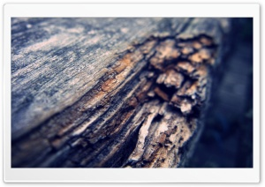 Tree Log HD Wide Wallpaper for Widescreen