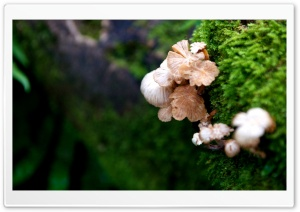 Tree Mushroom HD Wide Wallpaper for Widescreen