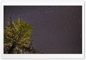 Tree, Night, Star Trail Ultra HD Wallpaper for 4K UHD Widescreen desktop, tablet & smartphone