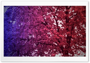 Tree of Colors HD Wide Wallpaper for Widescreen