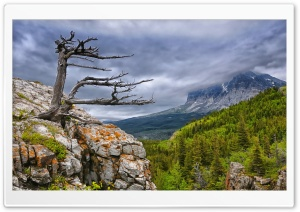 Tree On Rock In Glacier National Park HD Wide Wallpaper for Widescreen