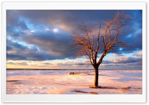 Tree On The Beach HD Wide Wallpaper for Widescreen