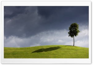 Tree On The Hill HD Wide Wallpaper for 4K UHD Widescreen desktop & smartphone