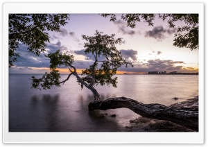 Tree over Water Ultra HD Wallpaper for 4K UHD Widescreen desktop, tablet & smartphone
