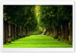 Tree Path HD Wide Wallpaper for Widescreen