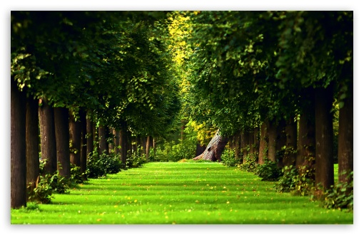 Tree Path HD wallpaper for Wide 16:10 5:3 Widescreen WHXGA WQXGA WUXGA WXGA WGA ; HD 16:9 High Definition WQHD QWXGA 1080p 900p 720p QHD nHD ; Standard 4:3 5:4 3:2 Fullscreen UXGA XGA SVGA QSXGA SXGA DVGA HVGA HQVGA devices ( Apple PowerBook G4 iPhone 4 3G 3GS iPod Touch ) ; Tablet 1:1 ; iPad 1/2/Mini ; Mobile 4:3 5:3 3:2 16:9 5:4 - UXGA XGA SVGA WGA DVGA HVGA HQVGA devices ( Apple PowerBook G4 iPhone 4 3G 3GS iPod Touch ) WQHD QWXGA 1080p 900p 720p QHD nHD QSXGA SXGA ; Dual 5:4 QSXGA SXGA ;