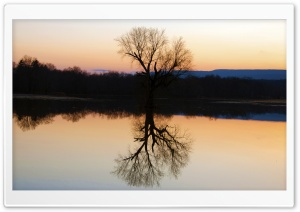 Tree Reflection In The Flooded Flats HD Wide Wallpaper for Widescreen