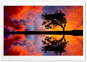 Tree Reflection In Water HD Wide Wallpaper for 4K UHD Widescreen desktop & smartphone