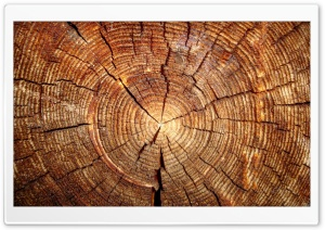 Tree Rings HD Wide Wallpaper for Widescreen