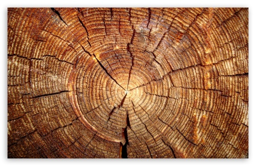 Tree Rings ❤ 4K UHD Wallpaper for Wide 16:10 5:3 Widescreen WHXGA WQXGA WUXGA WXGA WGA ; 4K UHD 16:9 Ultra High Definition 2160p 1440p 1080p 900p 720p ; Standard 4:3 5:4 3:2 Fullscreen UXGA XGA SVGA QSXGA SXGA DVGA HVGA HQVGA ( Apple PowerBook G4 iPhone 4 3G 3GS iPod Touch ) ; iPad 1/2/Mini ; Mobile 4:3 5:3 3:2 16:9 5:4 - UXGA XGA SVGA WGA DVGA HVGA HQVGA ( Apple PowerBook G4 iPhone 4 3G 3GS iPod Touch ) 2160p 1440p 1080p 900p 720p QSXGA SXGA ;