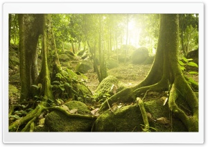 Tree Roots HD Wide Wallpaper for Widescreen