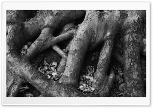 Tree Roots Black And White HD Wide Wallpaper for Widescreen