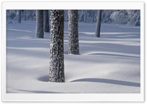 Tree Shadows On Snow HD Wide Wallpaper for 4K UHD Widescreen desktop & smartphone