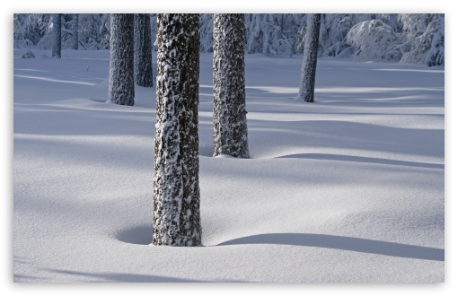 Tree Shadows On Snow HD wallpaper for Wide 16:10 5:3 Widescreen WHXGA WQXGA WUXGA WXGA WGA ; HD 16:9 High Definition WQHD QWXGA 1080p 900p 720p QHD nHD ; UHD 16:9 WQHD QWXGA 1080p 900p 720p QHD nHD ; Standard 4:3 5:4 3:2 Fullscreen UXGA XGA SVGA QSXGA SXGA DVGA HVGA HQVGA devices ( Apple PowerBook G4 iPhone 4 3G 3GS iPod Touch ) ; Tablet 1:1 ; iPad 1/2/Mini ; Mobile 4:3 5:3 3:2 16:9 5:4 - UXGA XGA SVGA WGA DVGA HVGA HQVGA devices ( Apple PowerBook G4 iPhone 4 3G 3GS iPod Touch ) WQHD QWXGA 1080p 900p 720p QHD nHD QSXGA SXGA ; Dual 16:10 5:3 16:9 4:3 5:4 WHXGA WQXGA WUXGA WXGA WGA WQHD QWXGA 1080p 900p 720p QHD nHD UXGA XGA SVGA QSXGA SXGA ;