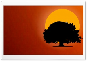 Tree Silhouette HD Wide Wallpaper for Widescreen