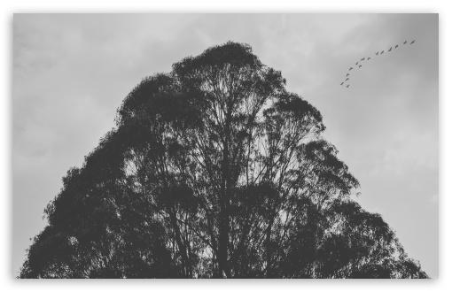Download Tree Silhouette HD Wallpaper