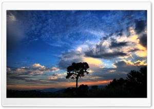 Tree Silhouette Against Sunset HD Wide Wallpaper for Widescreen