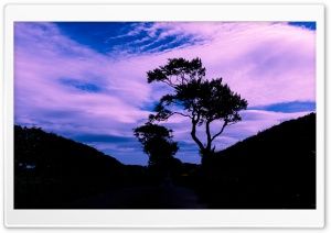 Tree Silhouette, Blue Sky, Clouds HD Wide Wallpaper for 4K UHD Widescreen desktop & smartphone