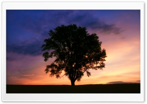 Tree Silhouette Photography HD Wide Wallpaper for Widescreen