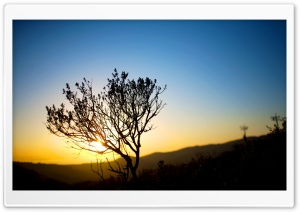 Tree Silhouette, Sunrise HD Wide Wallpaper for Widescreen