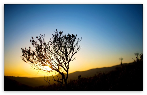 Tree Silhouette, Sunrise HD desktop wallpaper : High Definition