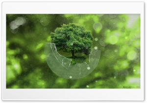 Tree Sphere HD Wide Wallpaper for Widescreen