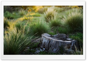 Tree Stump, Summer HD Wide Wallpaper for Widescreen