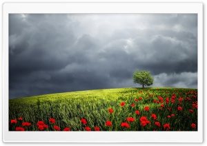 Tree, Summer Storm HD Wide Wallpaper for Widescreen