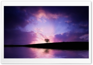 Tree Sunset HD Wide Wallpaper for Widescreen