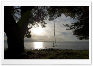 Tree Swing HD Wide Wallpaper for Widescreen