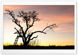Tree Top Ladder HD Wide Wallpaper for Widescreen