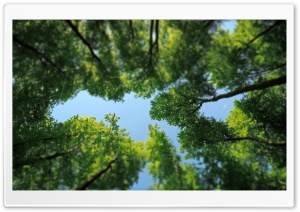 Tree Tops HD Wide Wallpaper for Widescreen
