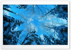 Tree Tops And Blue Sky HD Wide Wallpaper for Widescreen