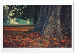 Tree Trunk HD Wide Wallpaper for Widescreen