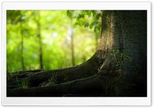 Tree Trunk And Roots HD Wide Wallpaper for Widescreen