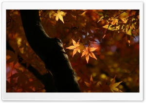 Tree Trunk, Autumn HD Wide Wallpaper for Widescreen