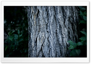 Tree Trunk Close-Up HD Wide Wallpaper for Widescreen