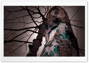 Tree Trunk, Dark HD Wide Wallpaper for Widescreen