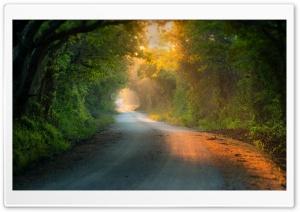 Tree Tunnel Road Ultra HD Wallpaper for 4K UHD Widescreen desktop, tablet & smartphone