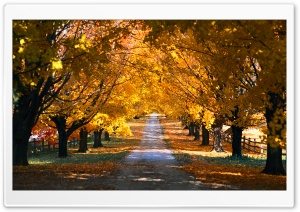 Tree Tunnel Road Autumn HD Wide Wallpaper for 4K UHD Widescreen desktop & smartphone
