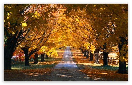 Tree Tunnel Road Autumn ❤ 4K UHD Wallpaper for Wide 16:10 5:3 Widescreen WHXGA WQXGA WUXGA WXGA WGA ; 4K UHD 16:9 Ultra High Definition 2160p 1440p 1080p 900p 720p ; UHD 16:9 2160p 1440p 1080p 900p 720p ; Standard 4:3 5:4 3:2 Fullscreen UXGA XGA SVGA QSXGA SXGA DVGA HVGA HQVGA ( Apple PowerBook G4 iPhone 4 3G 3GS iPod Touch ) ; Tablet 1:1 ; iPad 1/2/Mini ; Mobile 4:3 5:3 3:2 16:9 5:4 - UXGA XGA SVGA WGA DVGA HVGA HQVGA ( Apple PowerBook G4 iPhone 4 3G 3GS iPod Touch ) 2160p 1440p 1080p 900p 720p QSXGA SXGA ; Dual 4:3 5:4 UXGA XGA SVGA QSXGA SXGA ;