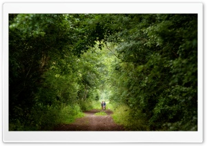 Tree Tunnel, Summer Ultra HD Wallpaper for 4K UHD Widescreen desktop, tablet & smartphone