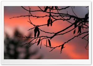 Tree Twigs, Twilight HD Wide Wallpaper for Widescreen