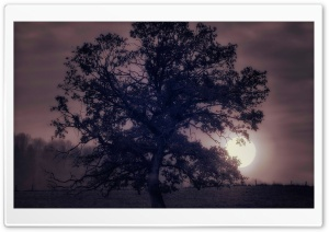 Tree Under Full Moon HD Wide Wallpaper for Widescreen