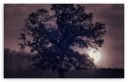 Tree Under Full Moon HD wallpaper for Wide 16:10 5:3 Widescreen WHXGA WQXGA WUXGA WXGA WGA ; HD 16:9 High Definition WQHD QWXGA 1080p 900p 720p QHD nHD ; UHD 16:9 WQHD QWXGA 1080p 900p 720p QHD nHD ; Standard 4:3 5:4 3:2 Fullscreen UXGA XGA SVGA QSXGA SXGA DVGA HVGA HQVGA devices ( Apple PowerBook G4 iPhone 4 3G 3GS iPod Touch ) ; Tablet 1:1 ; iPad 1/2/Mini ; Mobile 4:3 5:3 3:2 16:9 5:4 - UXGA XGA SVGA WGA DVGA HVGA HQVGA devices ( Apple PowerBook G4 iPhone 4 3G 3GS iPod Touch ) WQHD QWXGA 1080p 900p 720p QHD nHD QSXGA SXGA ;