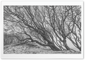 Tree, Wind, Black and White Ultra HD Wallpaper for 4K UHD Widescreen desktop, tablet & smartphone