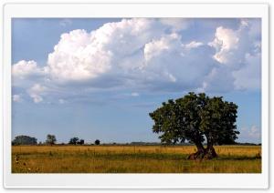 Tree With Big Roots Ultra HD Wallpaper for 4K UHD Widescreen desktop, tablet & smartphone