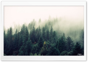 Trees HD Wide Wallpaper for Widescreen
