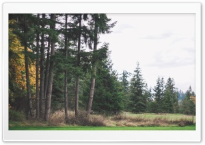 Trees HD Wide Wallpaper for 4K UHD Widescreen desktop & smartphone