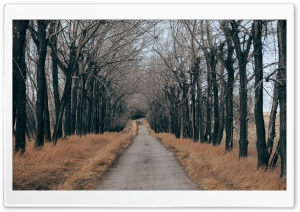 Trees Along A Country Road HD Wide Wallpaper for Widescreen